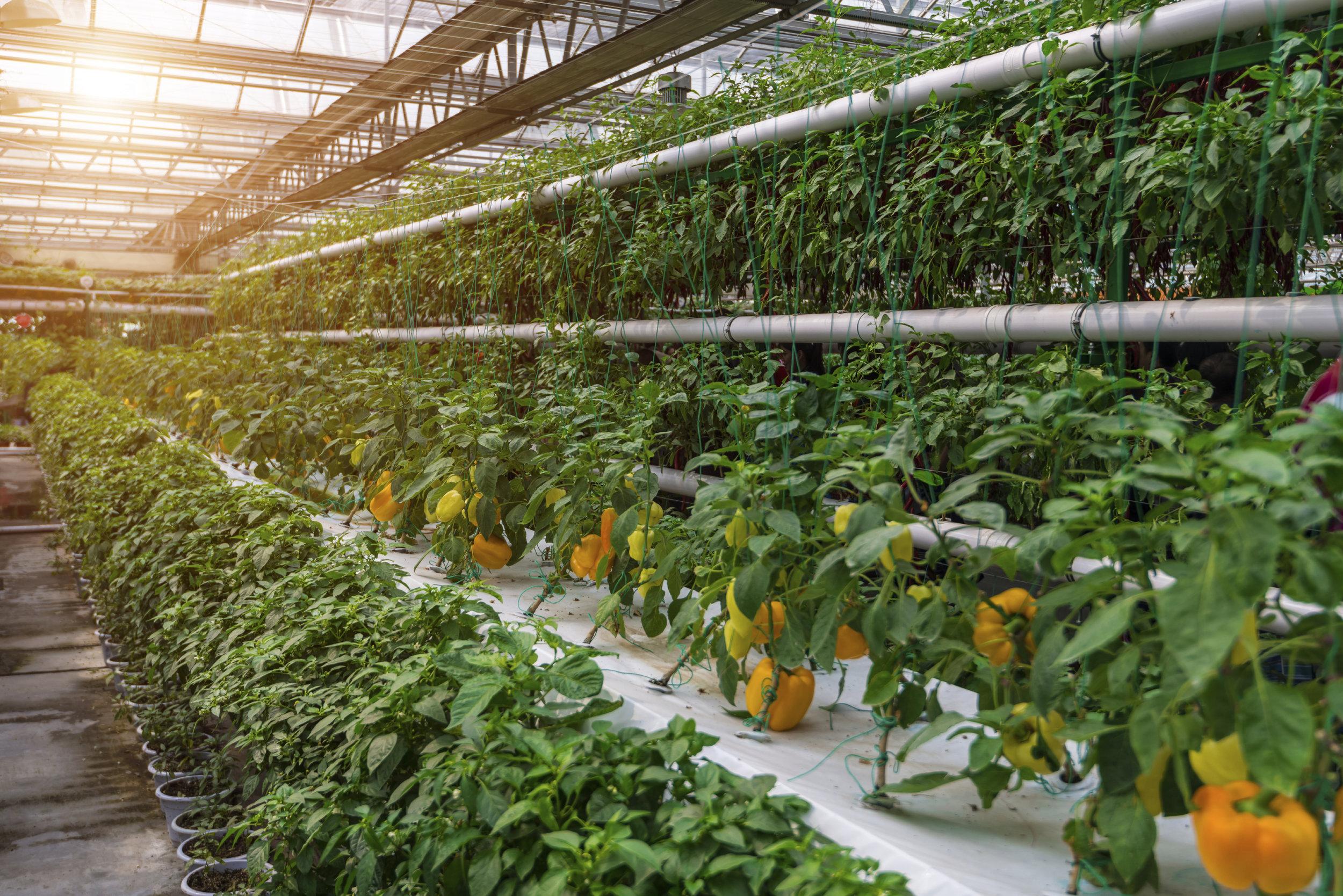 stock-photo-87140037-greenhouse.jpg