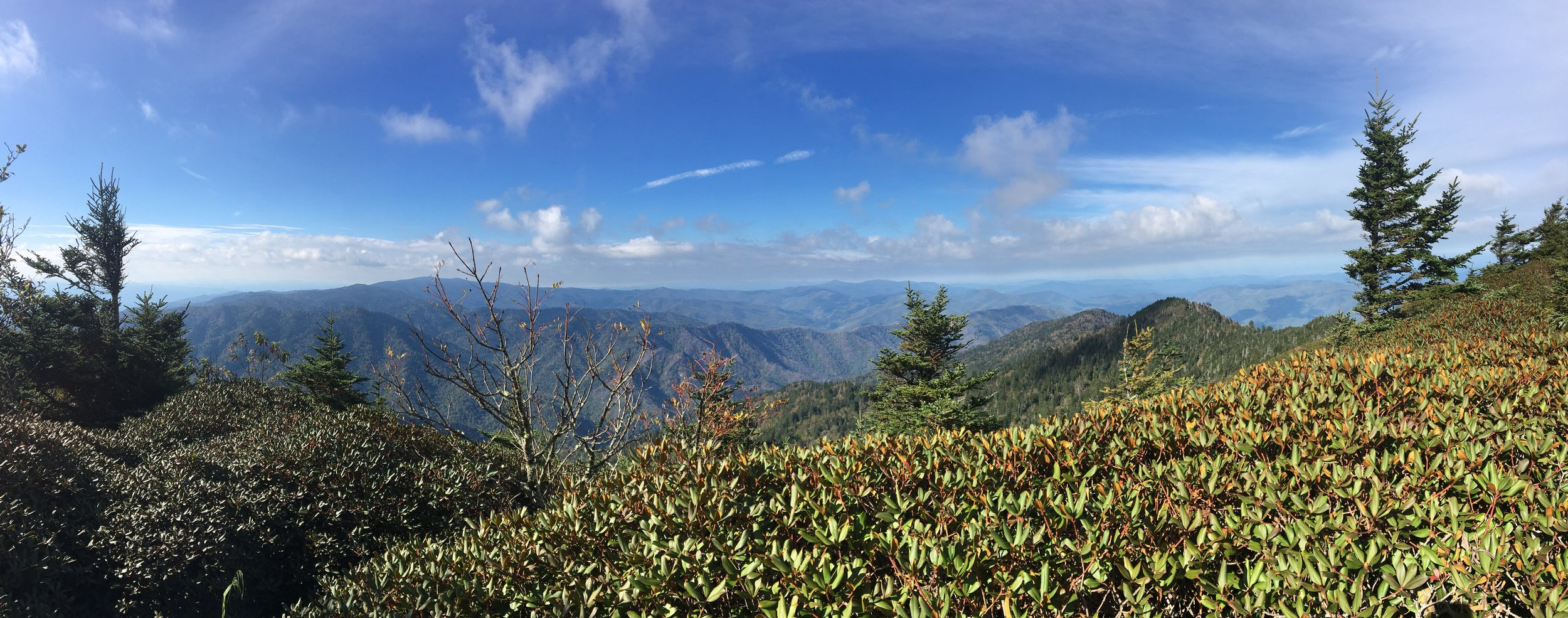 The view from Mt LeConte