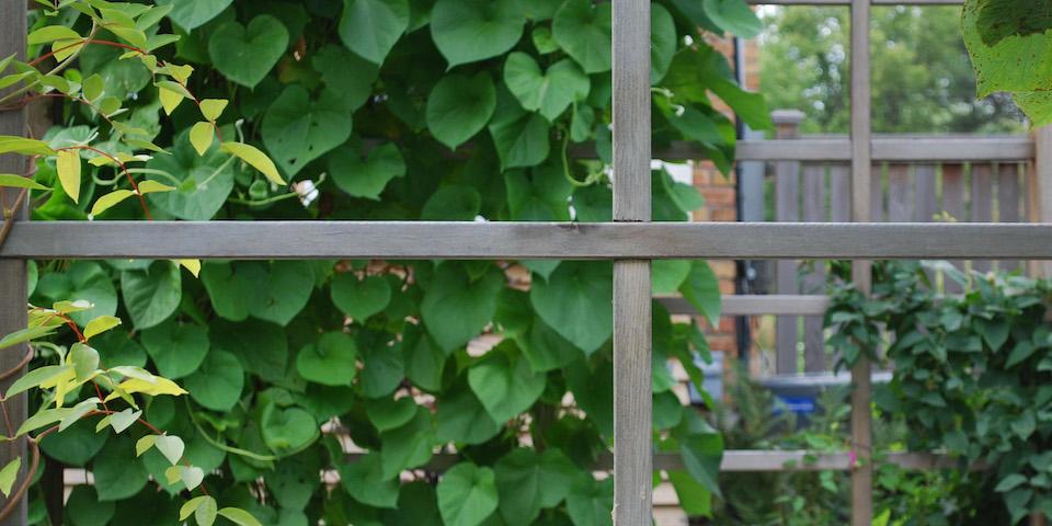 Garden Perogola -