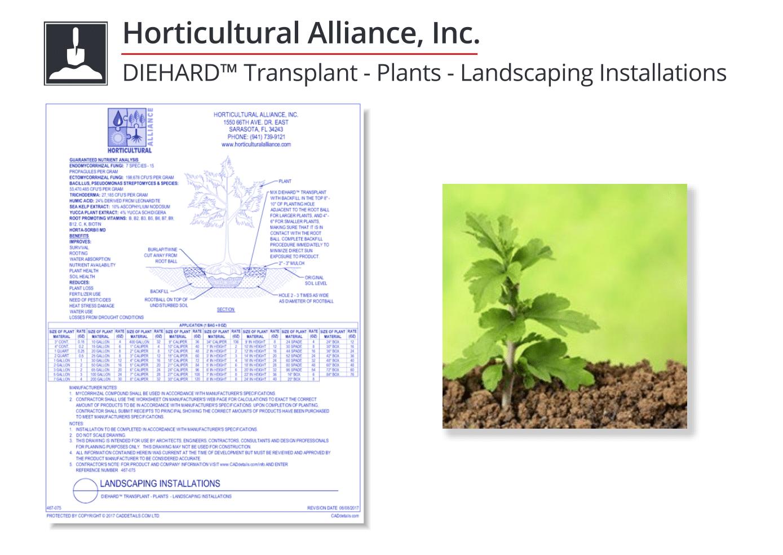 467-075 DIEHARD Transplant - Plants