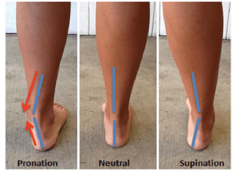 Ankle_Pronation_Position-56a9da465f9b58b7d0ff8ced.png