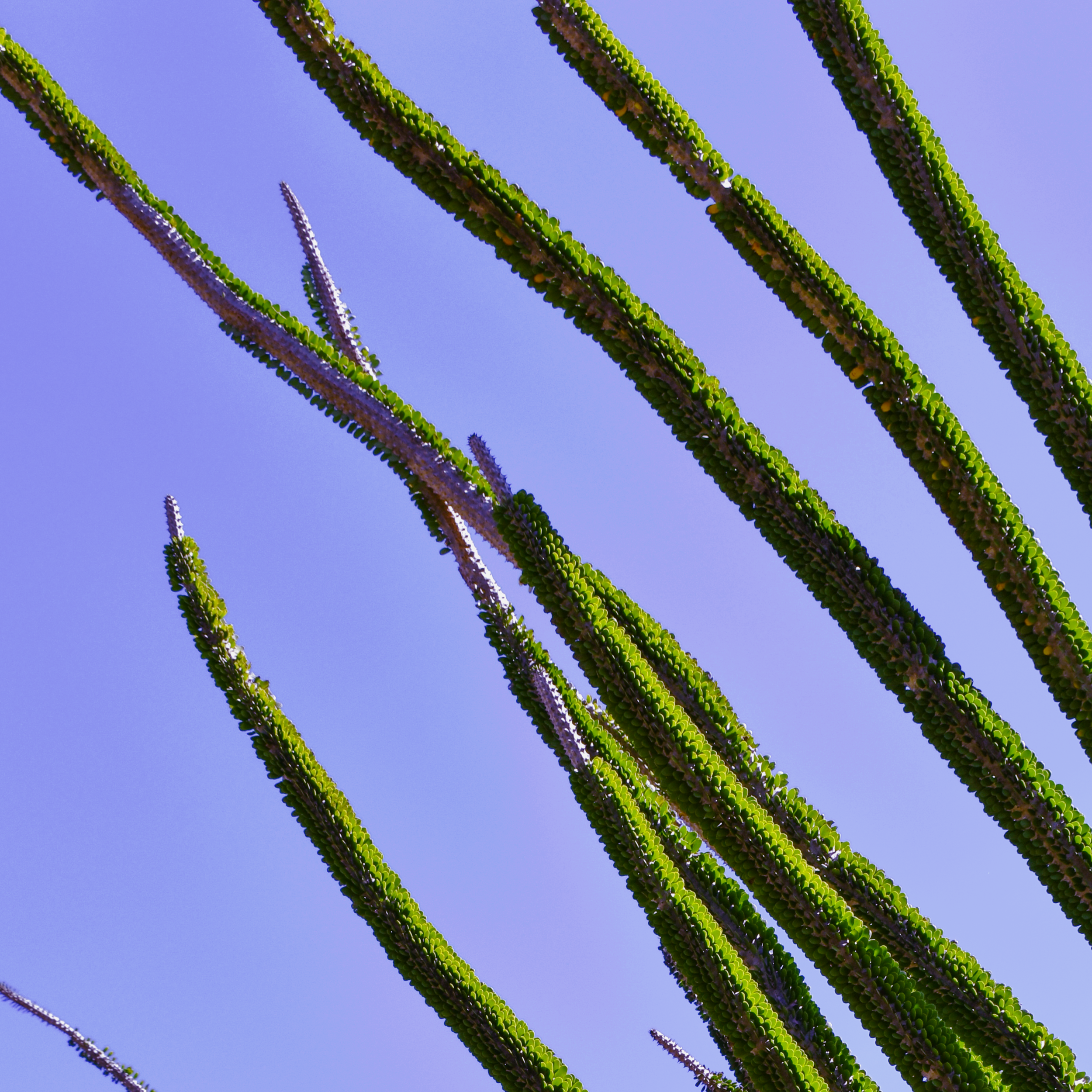 CactusBranches.png