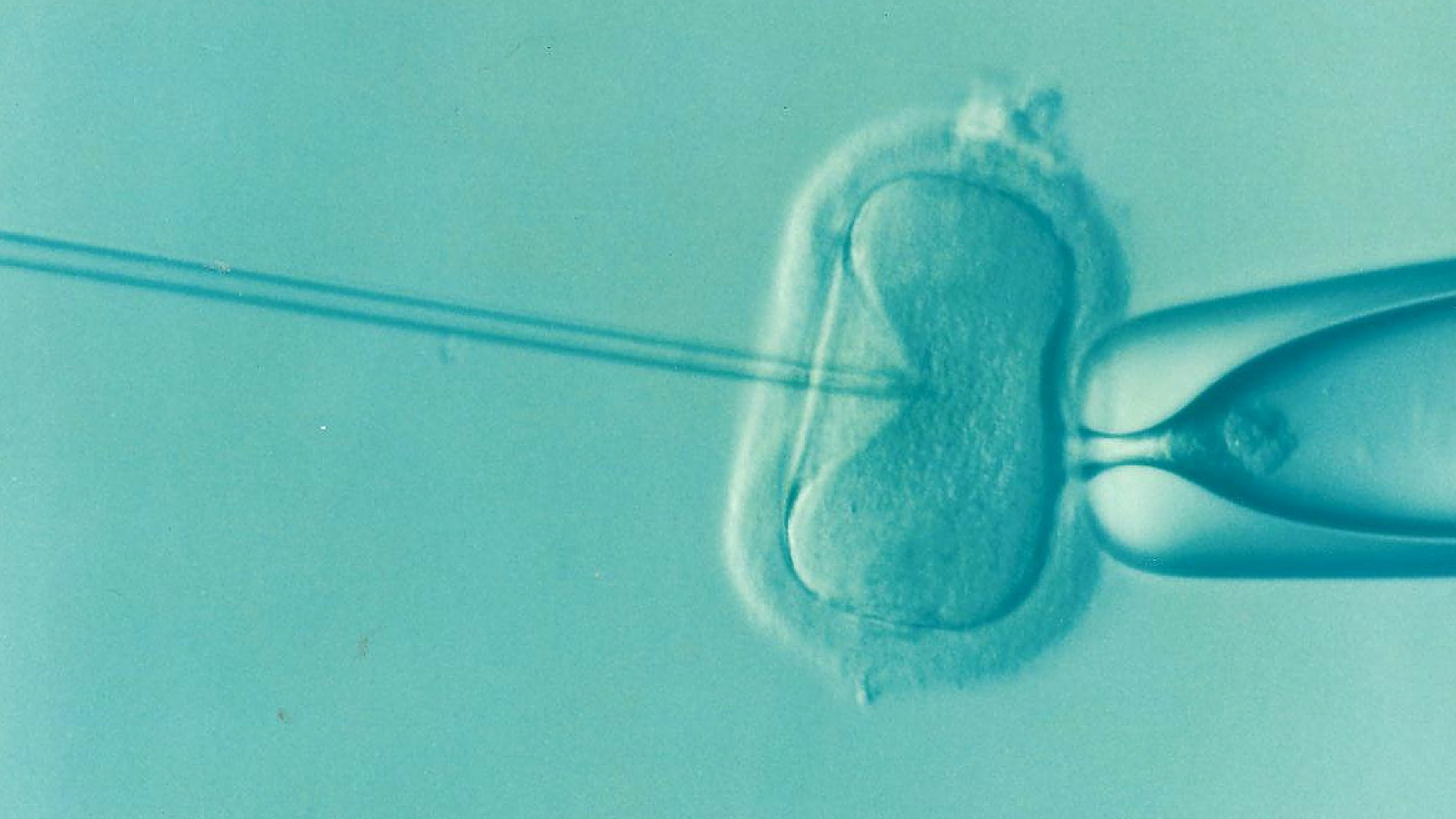 naturopathic assisted reproductive technology support