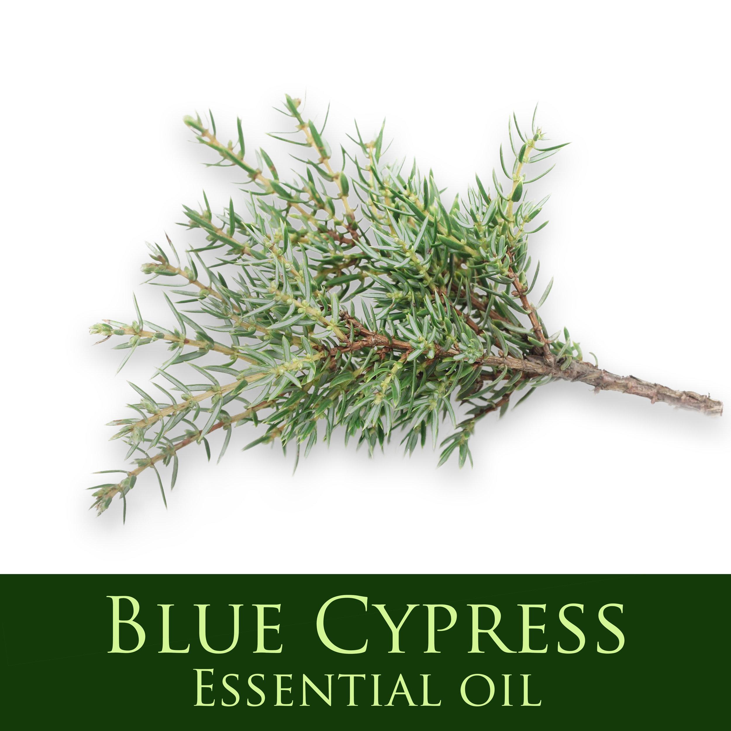 Blue Cypress.jpg