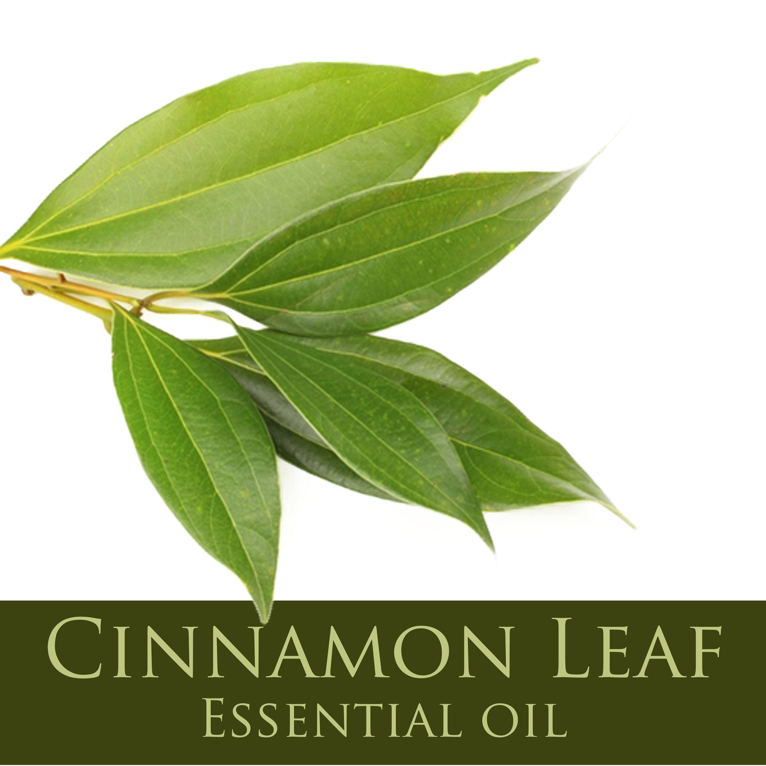 Cinnamon Leaf.jpg