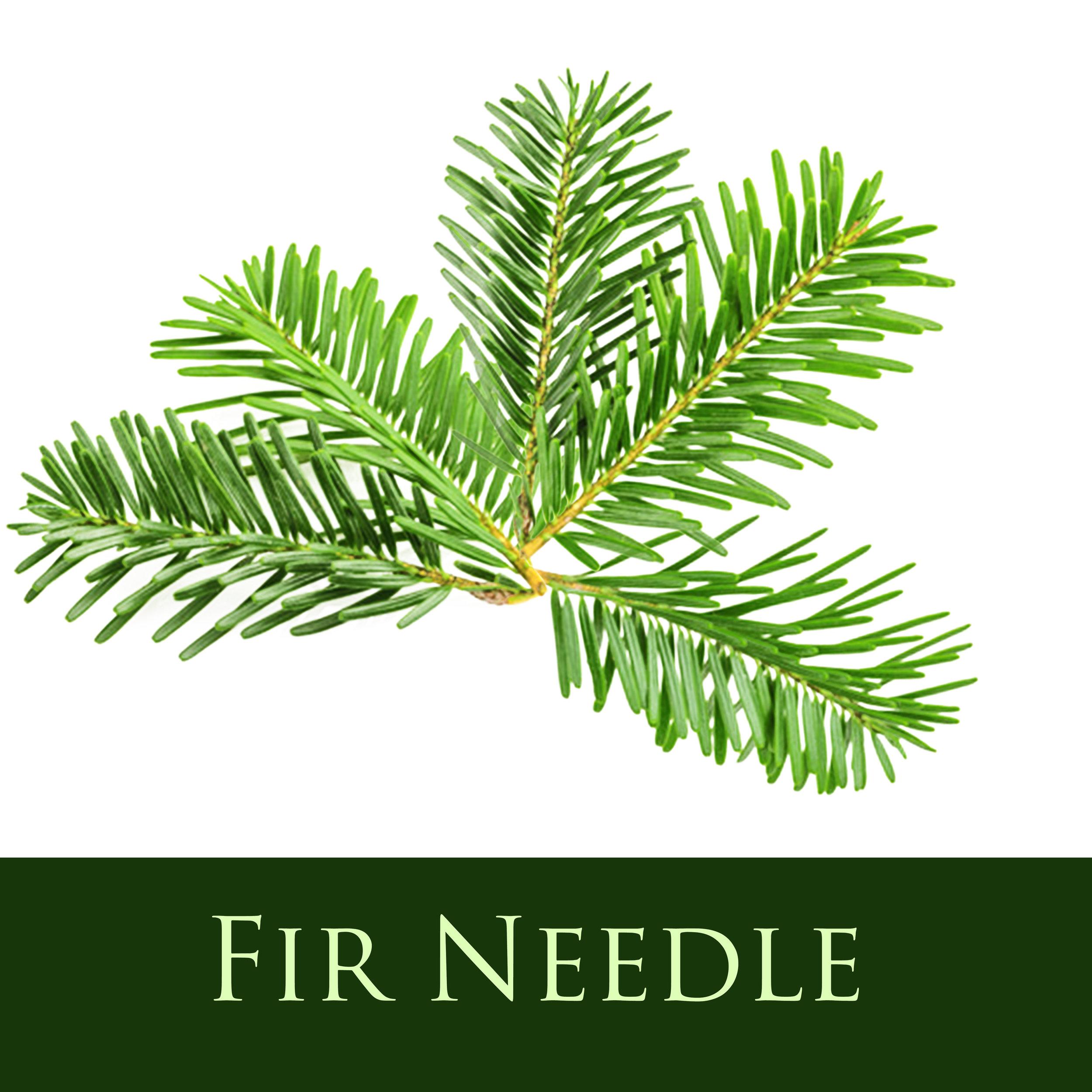 Fir Needle.jpg