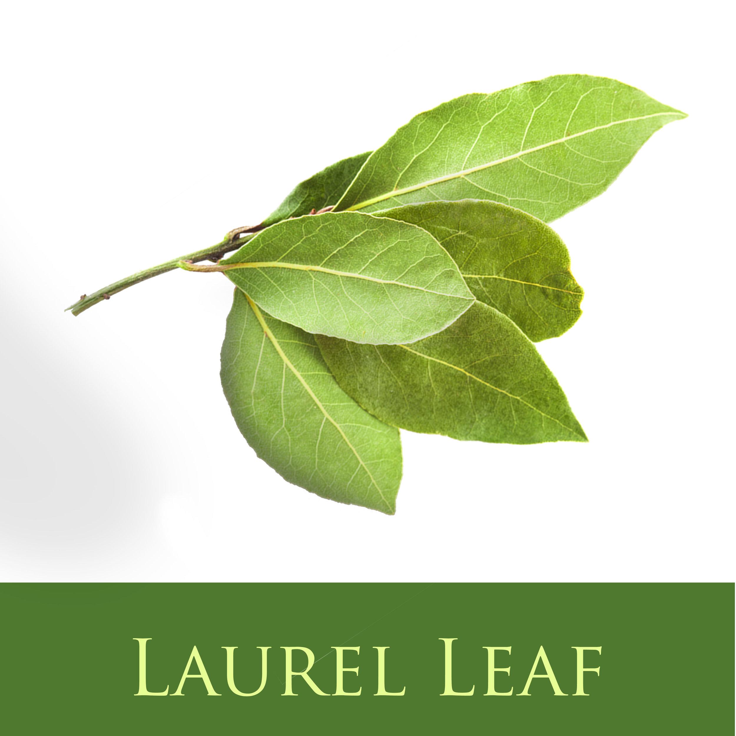 Laurel Leaf.jpg