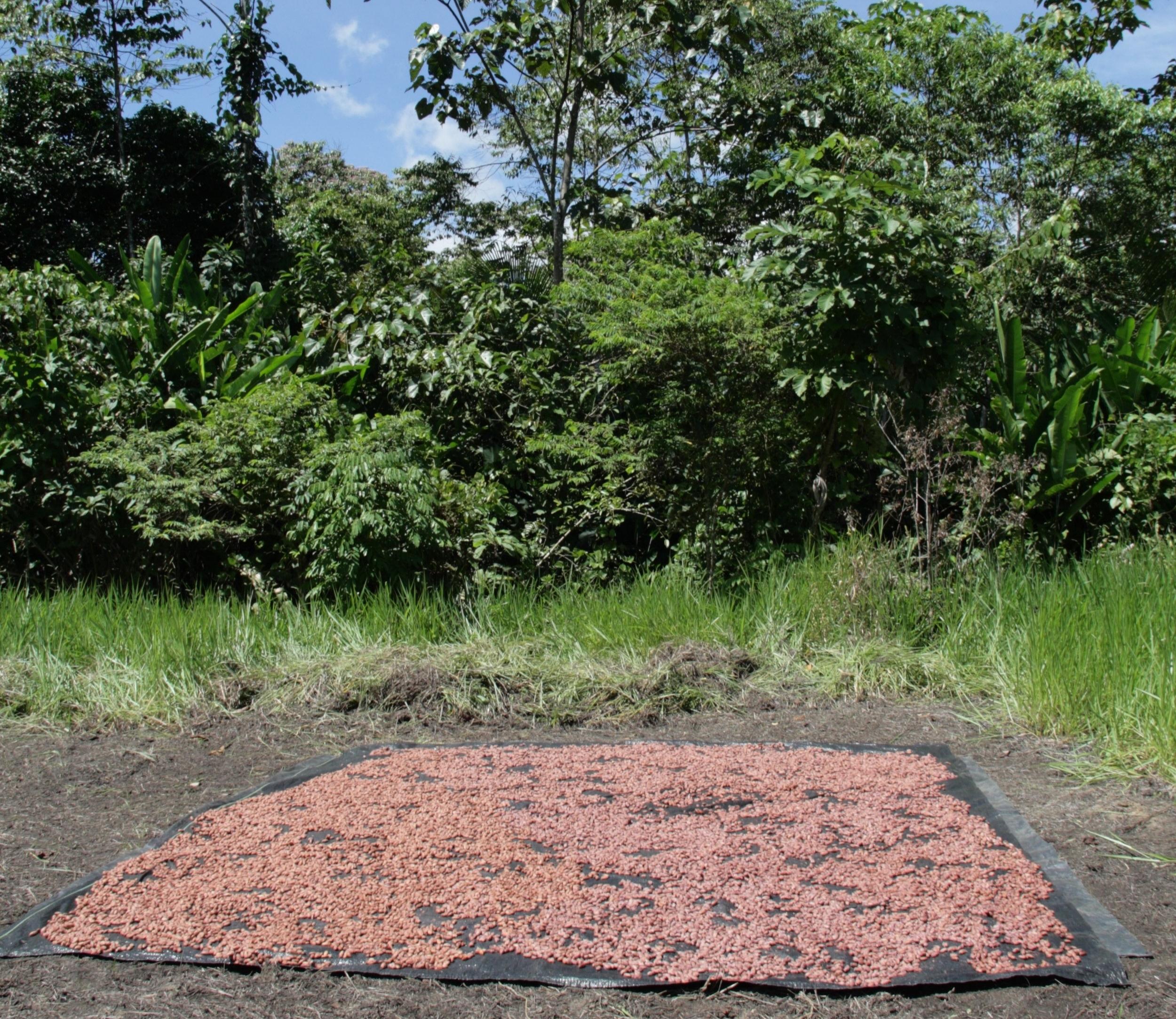 Garcoa Peru Curimana Kakao Trocknen.jpeg