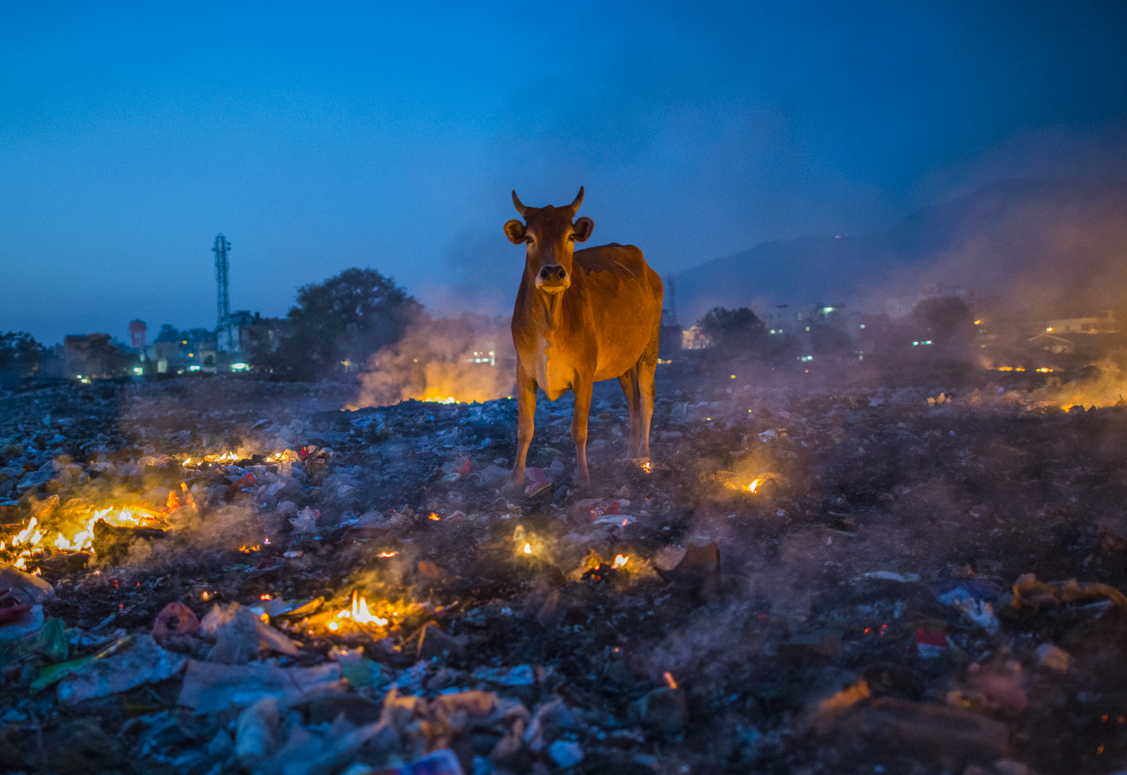 The ubiquitous and sacred cow standing in a pile of burning trash at the Rishikesh dump along the banks of the Ganges. Photo © Pete McBride.
