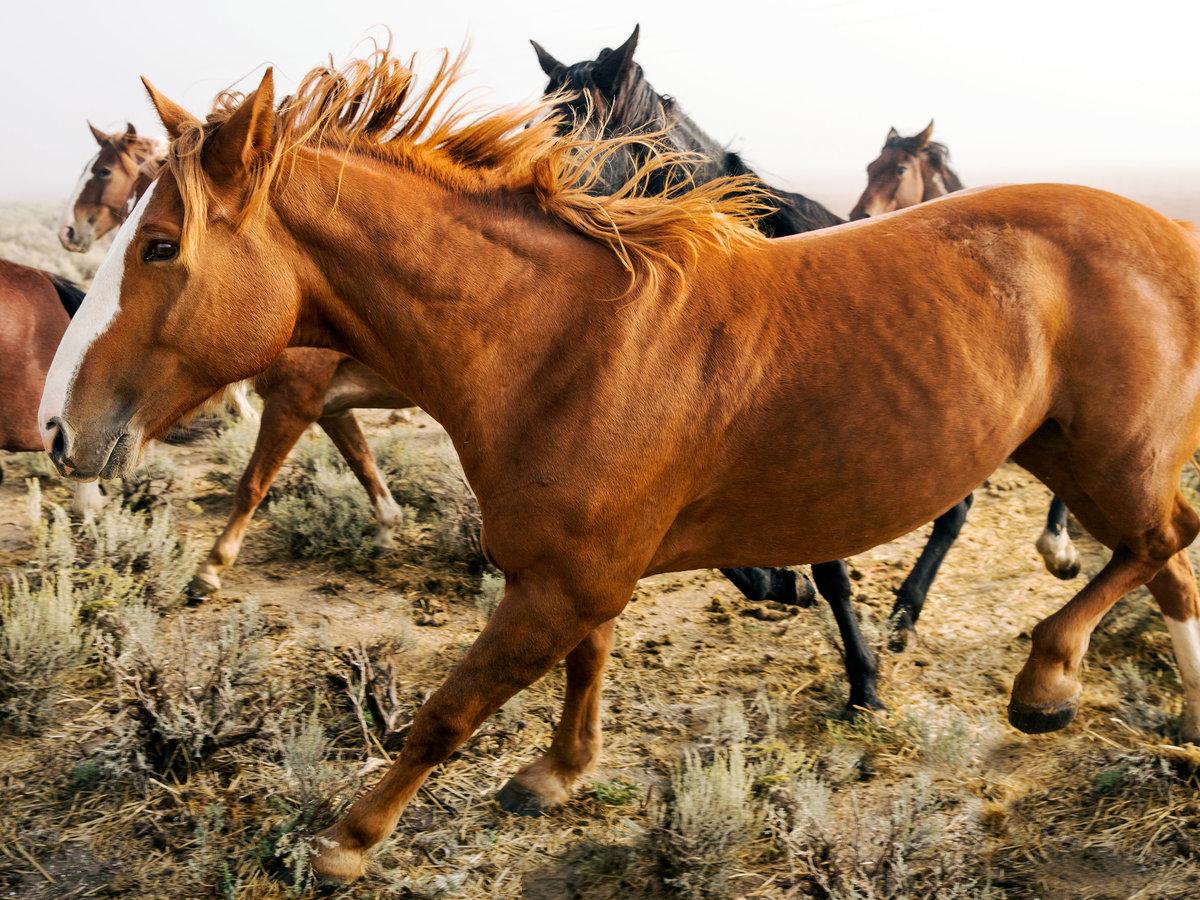 wild-horses-west-mustangs-up-close-0615.jpg