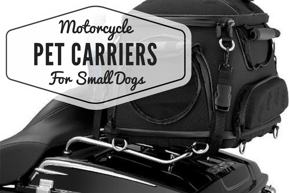 Best Motorcycle Dog Carriers for Your Traveling Small Dog
