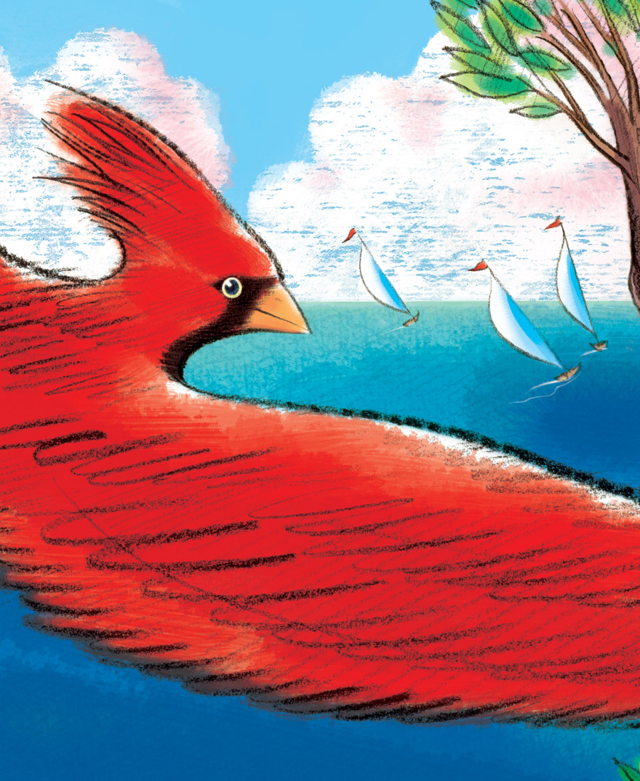 above  is a close-up view of the  final illustration , depicting the red Cardinal and the sail boats