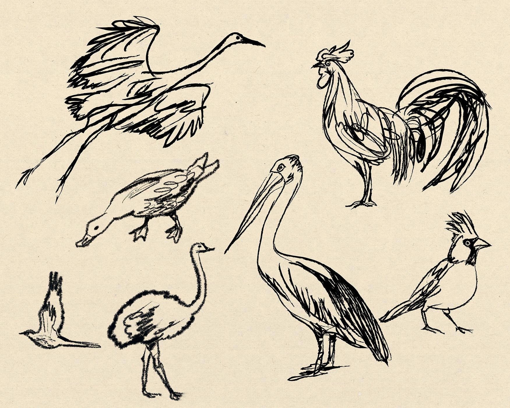 sketches of various birds… created quickly in black line by illustrator Steven Salerno. Visit stevensalerno.com