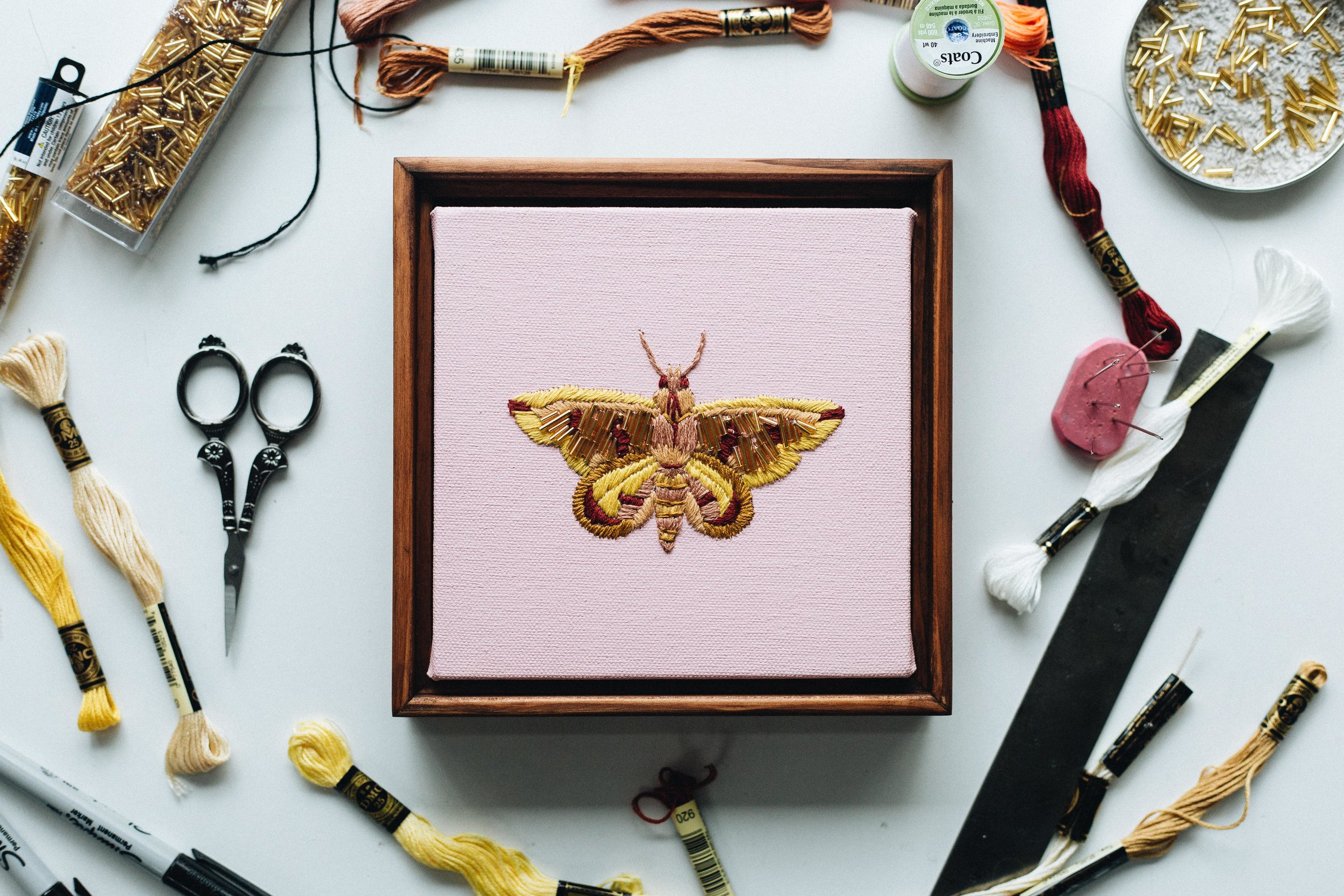 GOLDEN FIGURE MOTH 1.jpg