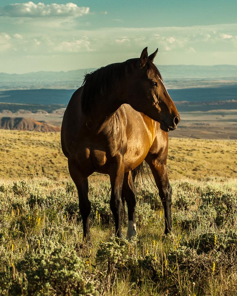 Wyoming Sky-20.jpg