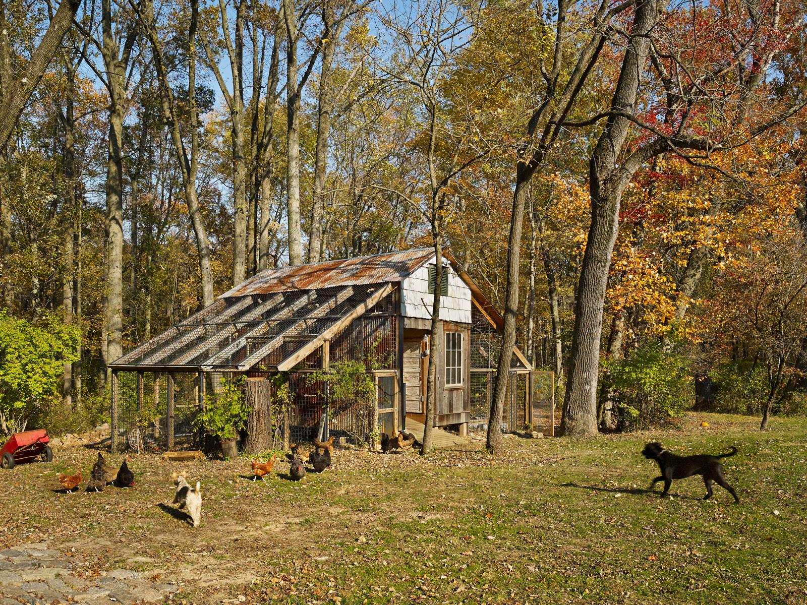 ChickenGarage01.jpg