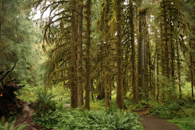 Who says that you have to travel to the Amazon in order to enjoy walking through a rainforest. In the western part of Washington, the warmer air currents coming off the Pacific Coast give way to a truly unique ecosystem in the Hoh Rainforest. The actual Hoh Rainforest Trail is a treasure of a hike; ten miles of magic as you meander through the open understory of massive trees cloaked in layers of moss. The nearby  Olympic Mountains  also offer some great panoramic views once you stumble out of the thickness of the rainforest canopy.