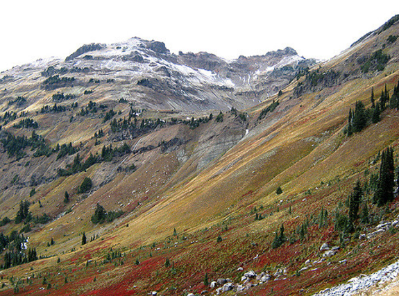 The  Goat Rocks Wilderness Area  might not be as well-known as some of the other natural areas around Washington State. Nonetheless, for wild flower lovers, you´d be hard pressed to find a more beautiful area. You can plan up a 20-mile round trip hike through Snowgrass Flats, the Cispus Basin, and the Nannie Ridge Loop. This hike is best done as a 3-4 day hike and will keep you high on the ridges offering stunning views of the valleys below and Mount Saint Helens in the distance.