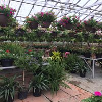 Mount Forest Greenhouse