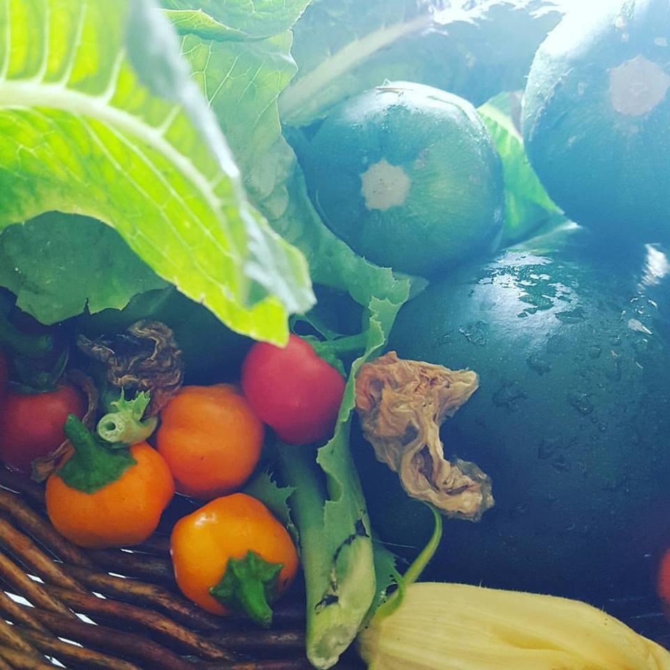 garden veggies.jpg