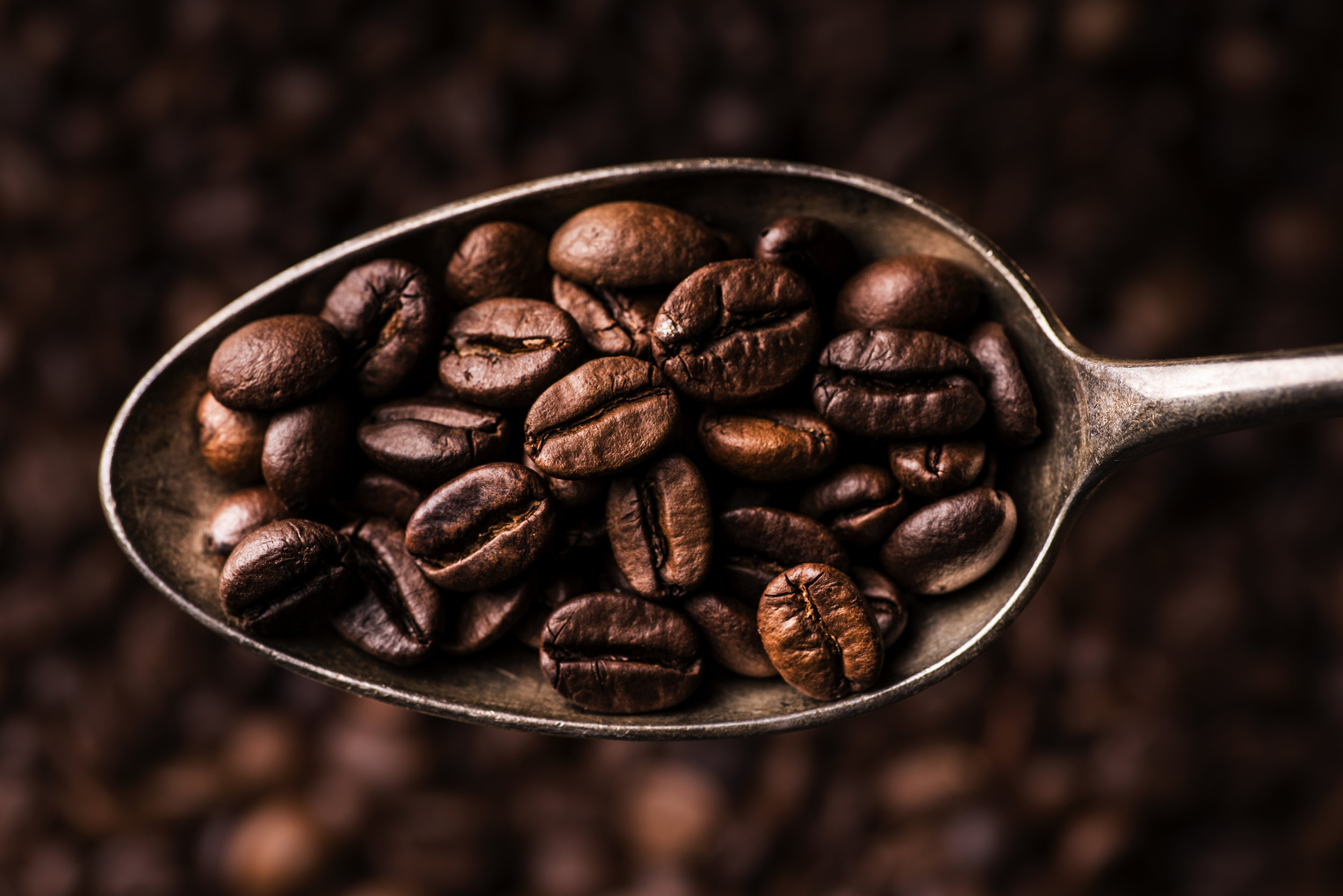 Top-dog-coffee-bar-coffee-beans-on-spoon.jpg