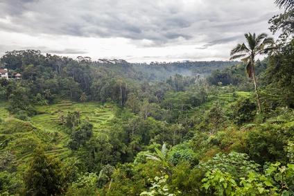 Coffee Plantation in Bali