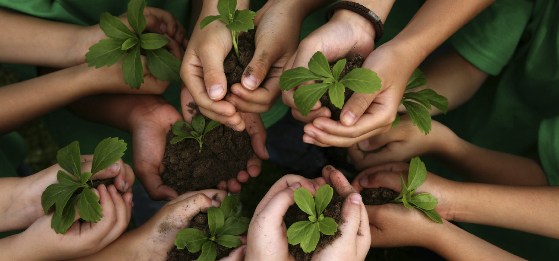 rsz_kids-hands-holding-plants.jpg
