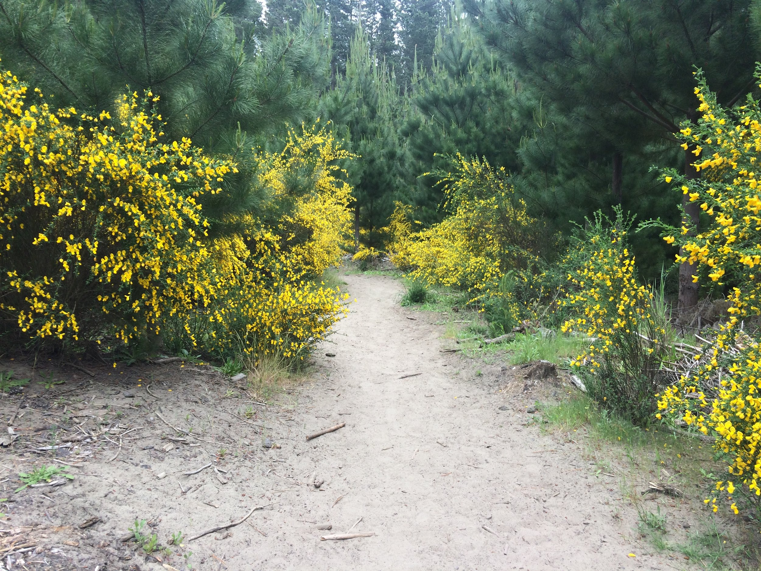 Wildflowers dotting the main Bottle Lake Forest trail