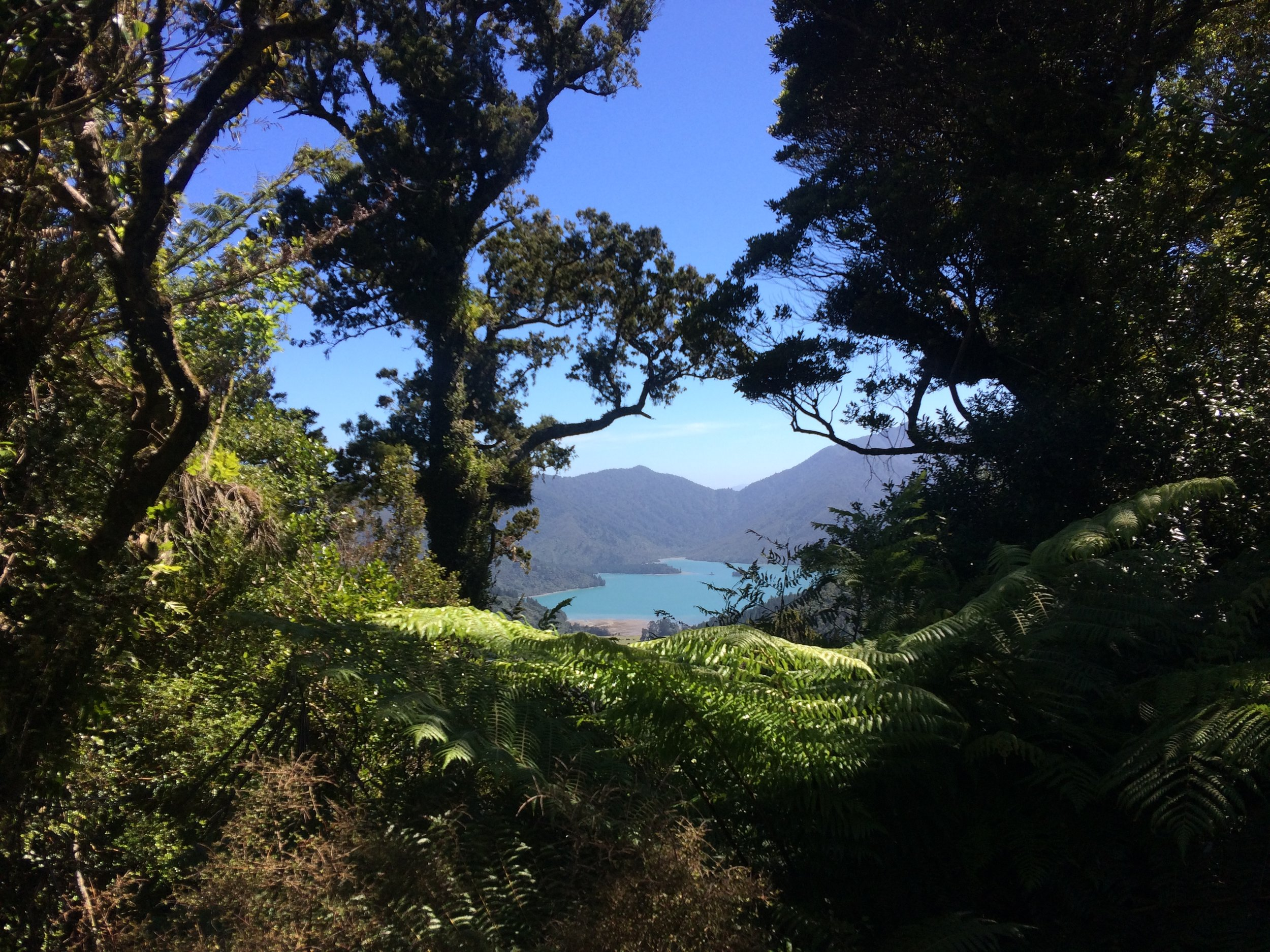 The view of Nydia Bay from the first saddle - Spectacular.