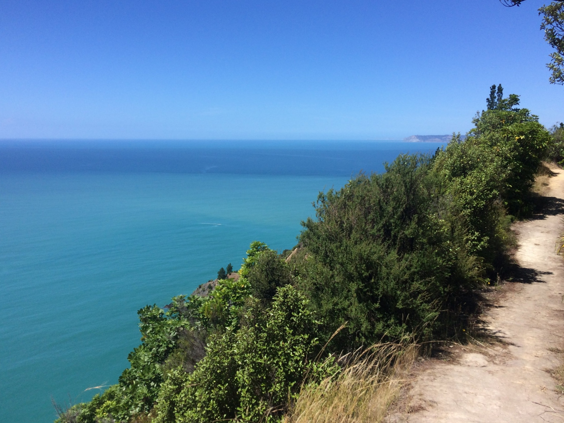 Views from the trail run portion of White's Bay