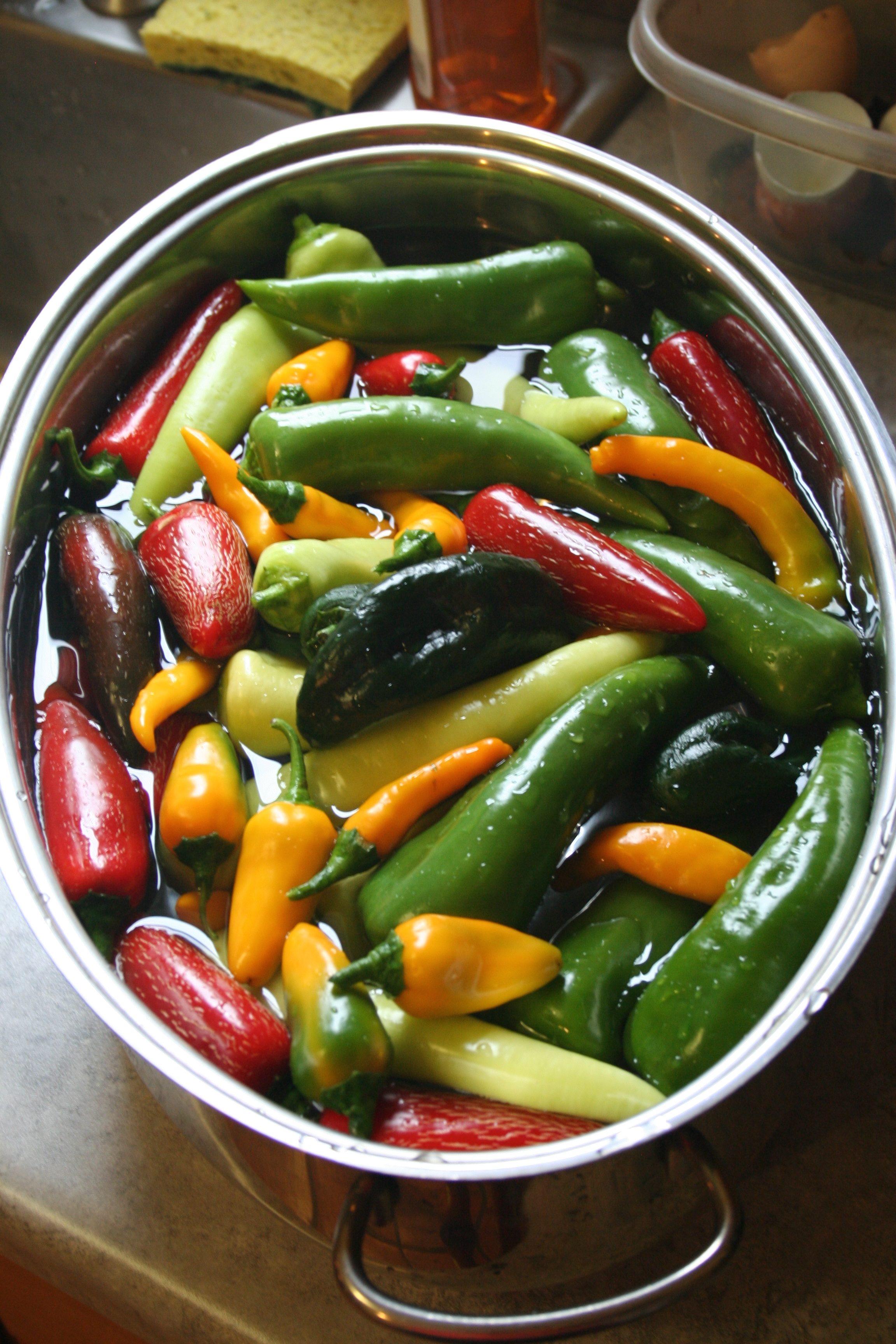 Jalafuegos, Pueblo Chiles, Hungarian Wax, Anchos and some yellow mutts I grew from saved seed.