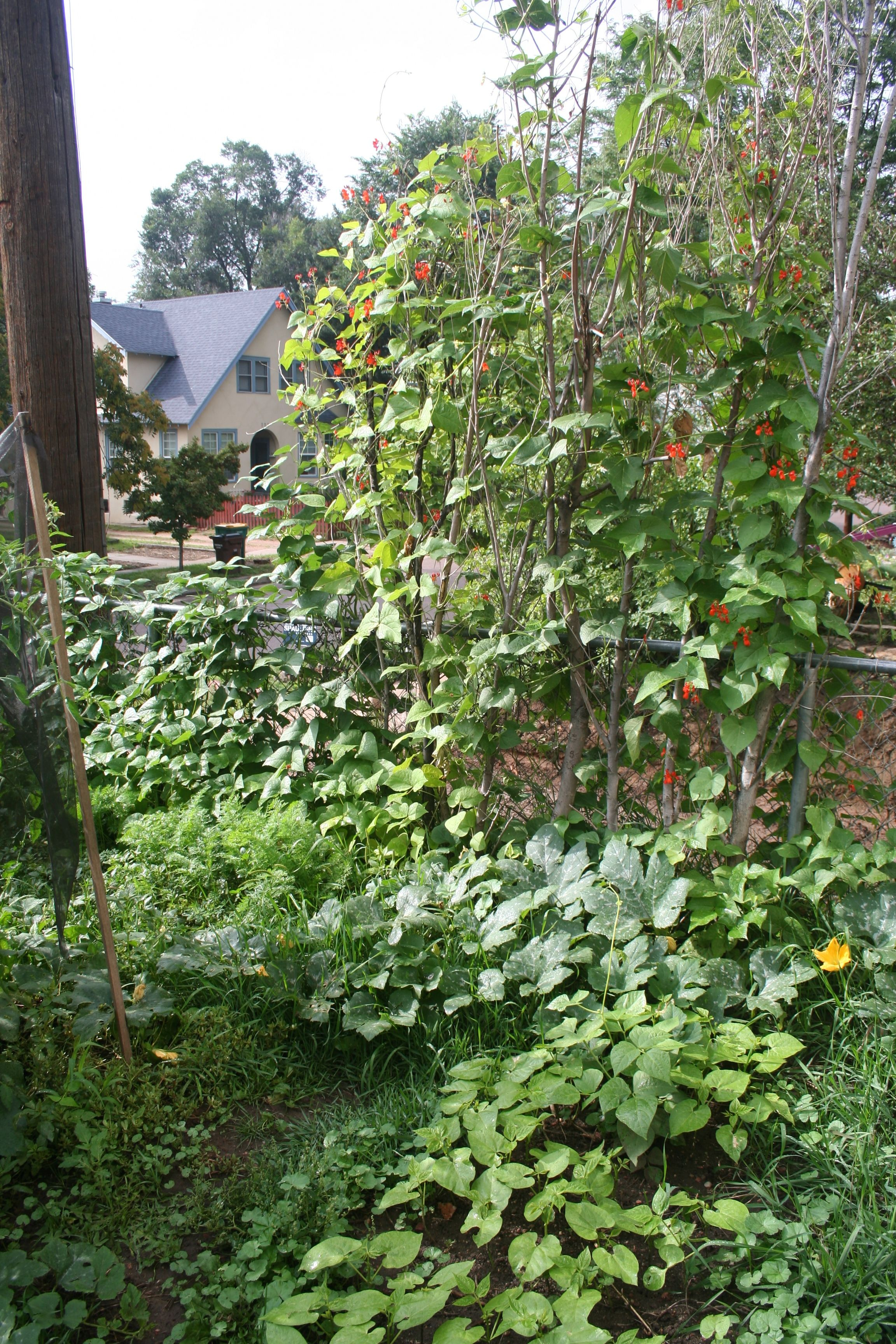 overgrowngarden1.jpg