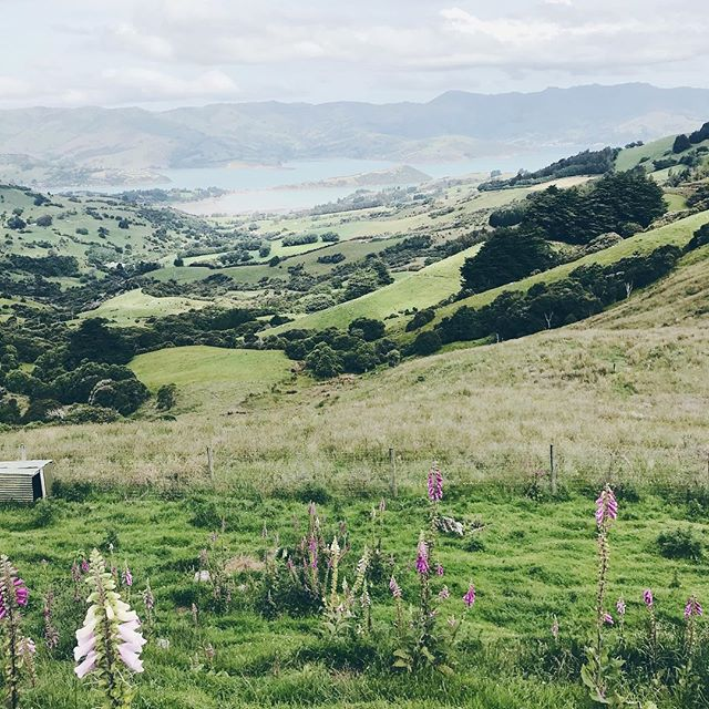 New Zealand, you're pretty.