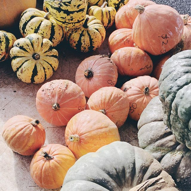 I didn't manage to grow any pumpkins so I'll just admire everyone else's at farmers markets ok?