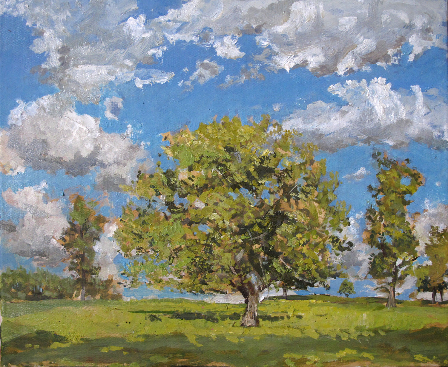 Oak Tree in June Light - Lowther ( Oil on Linen ) 38 x 45 cm