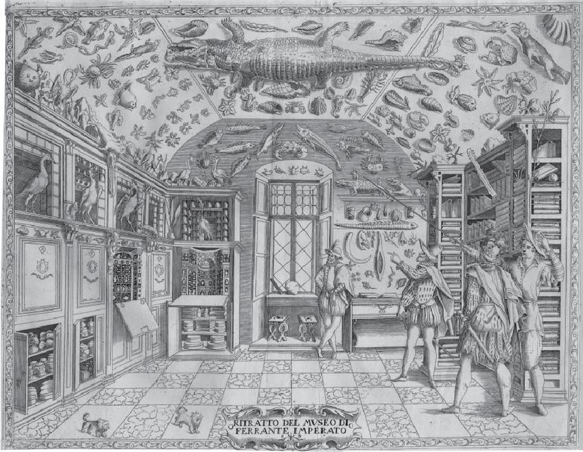 Museum-of-Ferrante-Imperato-from-DellHistoria-Naturale-Imperato-1599.png