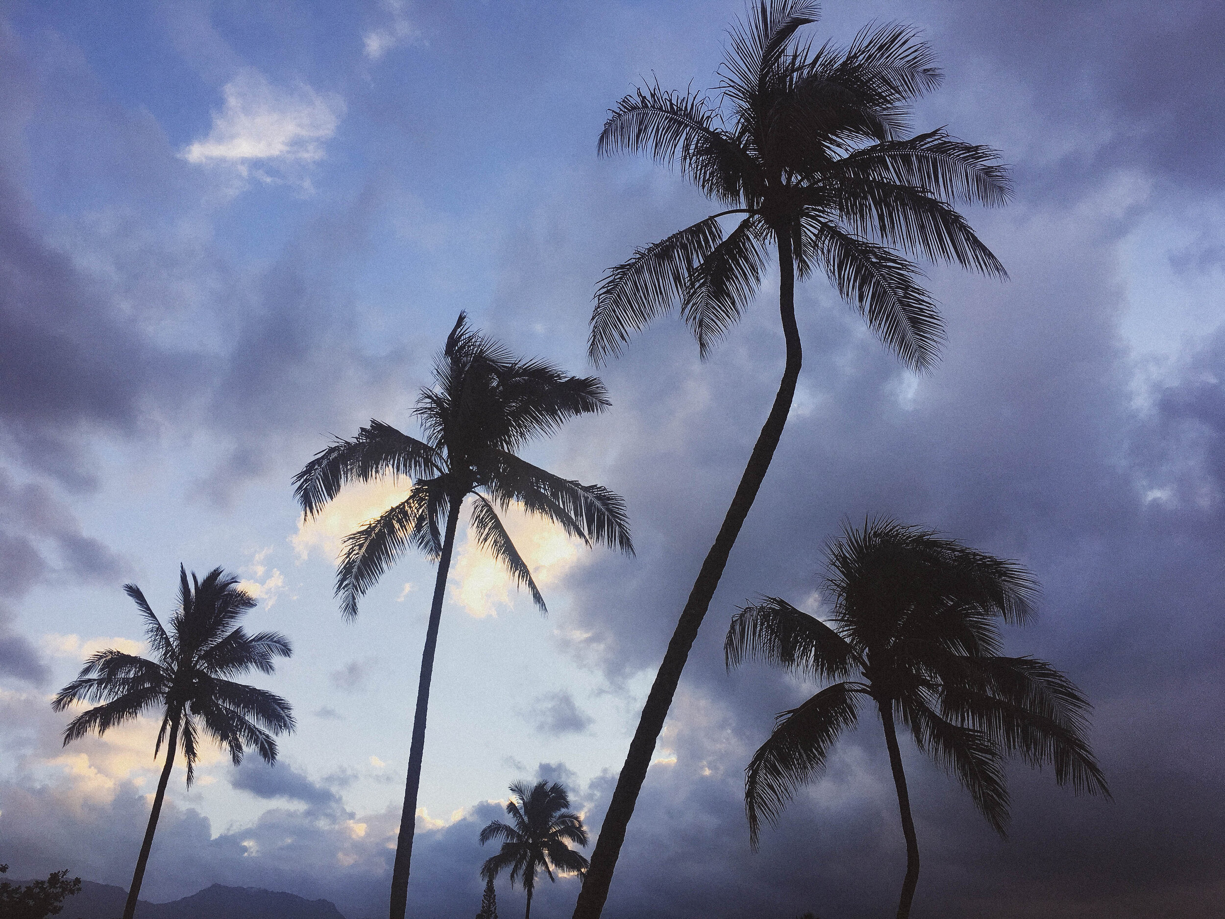 Sunset and palm trees in Kauai