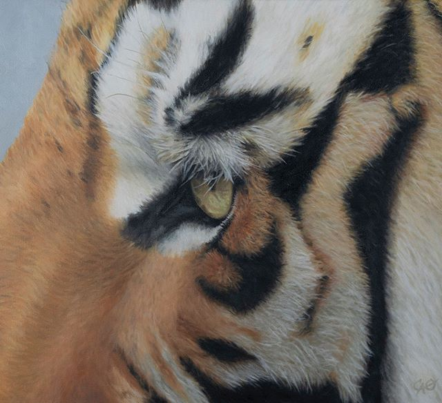 "This painting, ""Tiger Eye"", completes my Eyes to the Soul series of eight originals, all 16 x 20 inches. They will become an assemblage in the ""Feathers and Fur"" duette exhibition with Reine River, at MRG Fine Art, Oct 5-6, Sherman Oaks. I began this series in 2011 with a Zebra eye, named ""The Sad Zebra"". These animal eyes traveled with my son and me through three moves, one firestorm evacuation, and are now ready for display. Taking the reference photography and creating them has been a long process, but what a labor of love to detail these soulful eyes. Hope to see you at MRG Fine Art! 🎨"
