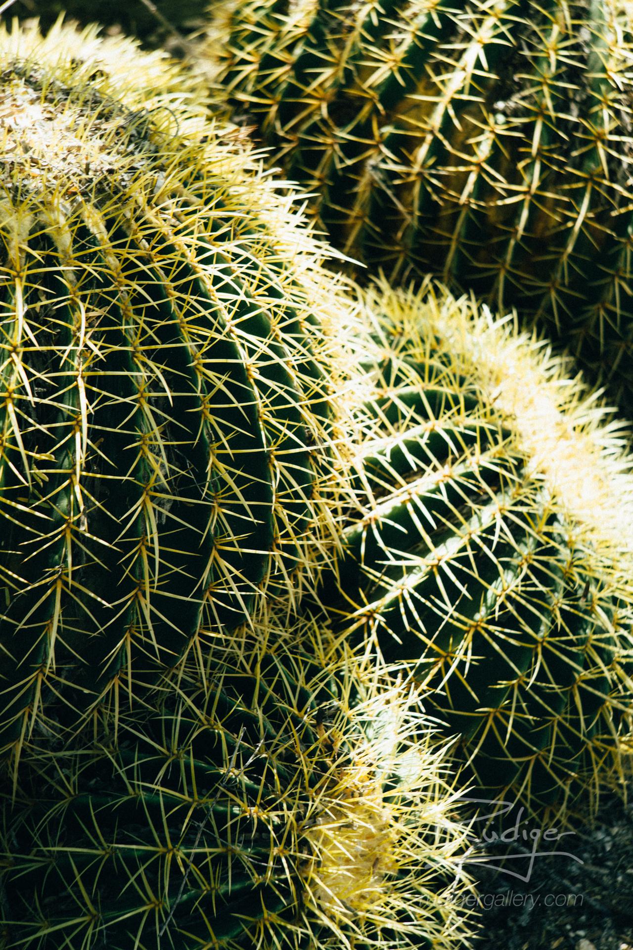 Rudiger-Poe-201728-Desert-Flora-441-2-1920.jpg