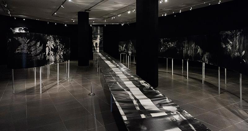 Instalación en BIenal de Fotografía de Daegu, Corea del Sur, setiembre 2014.  Installation Daegu Photo Biennale, sept. 2014, South Korea.