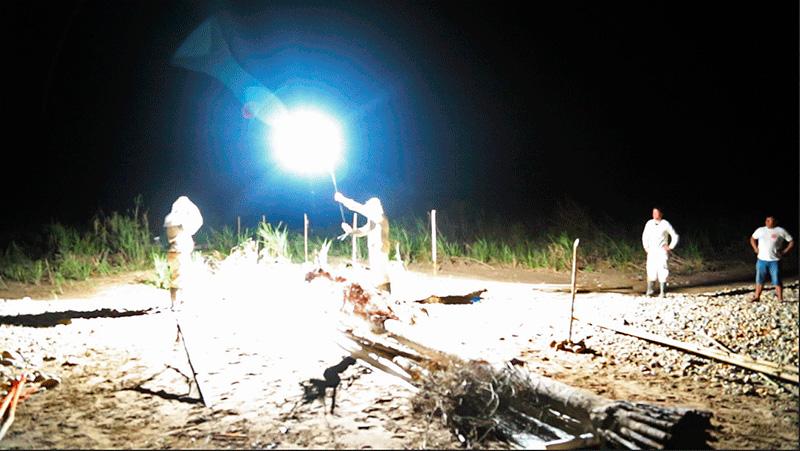 Durante la noche, se fotografió sin cámara sobre el papel colocado debajo del árbol, iluminado con la luz de un pequeño flash, de la luna y de rayos de tormenta.