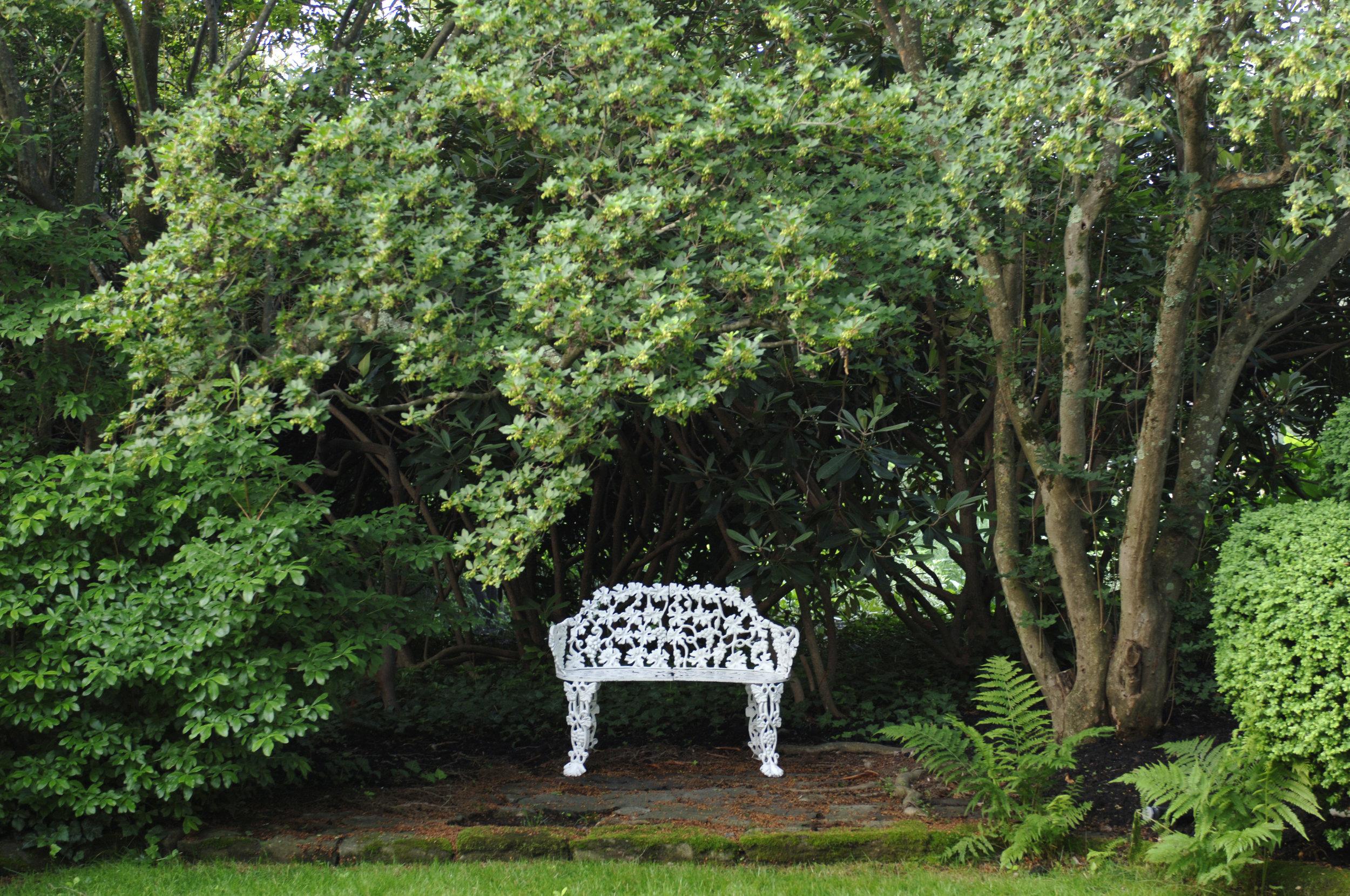 bench2andtree.jpg