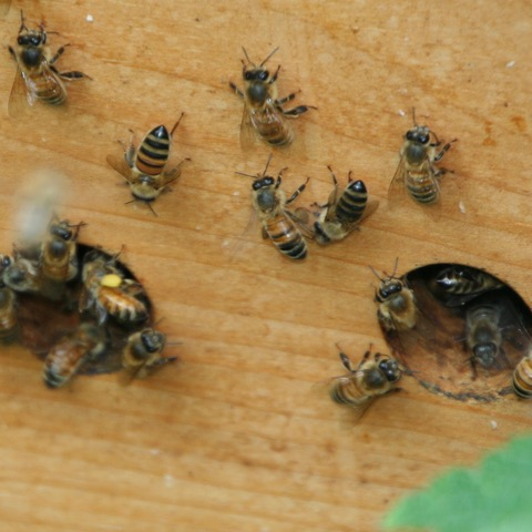 Bees Just Outside The Hive - Why Keep Bees?