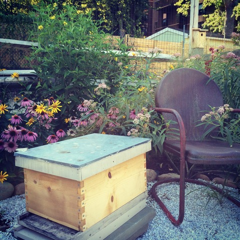 Why Keep Bees? The Benefits Are Endless - My Hive