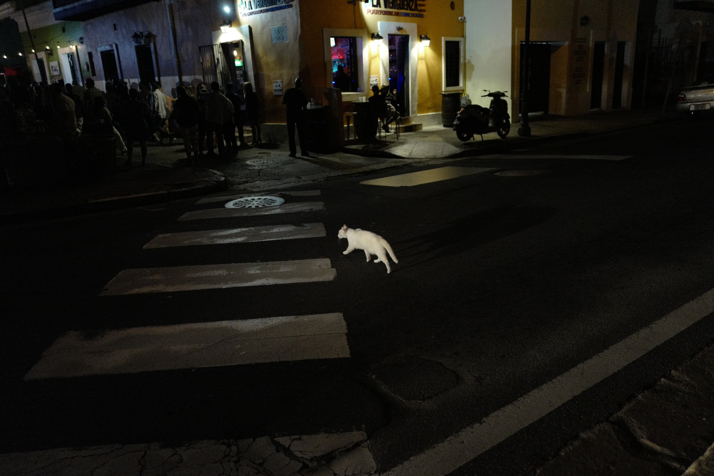 Photo by David Alan Harvey. A white cat on a dark night crosses Calle Norzagaray on the second night of the workshop.