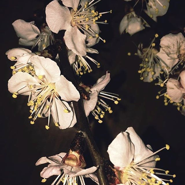 Smelling the Blossom 🌸⁣ via @alienleftbehind⁣ .⁣ .⁣ .⁣ .⁣ .⁣ #photography #visual #flower #blossom #activequiet #still #organicform #spring #darklight #sensual #mood #inspiration #contemporary #getinspired #fashiongram  #femimine #moda #pictureoftheday #repost #styleinspiration #simplicity #instaphot #subtlebeauty #effortlesslychic #londonfashion #springvibes #citychic #cosmopolitanchic #QUIN #quincollection⁣