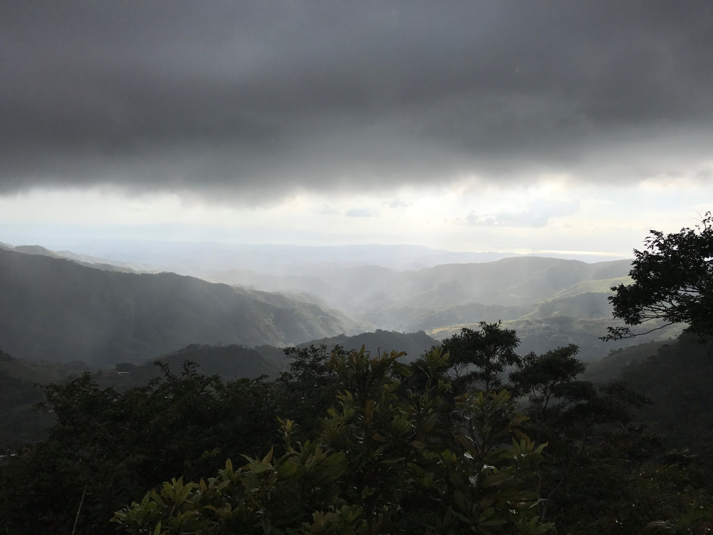 Cafe Monteverde, grown in harmony with the cloudforest