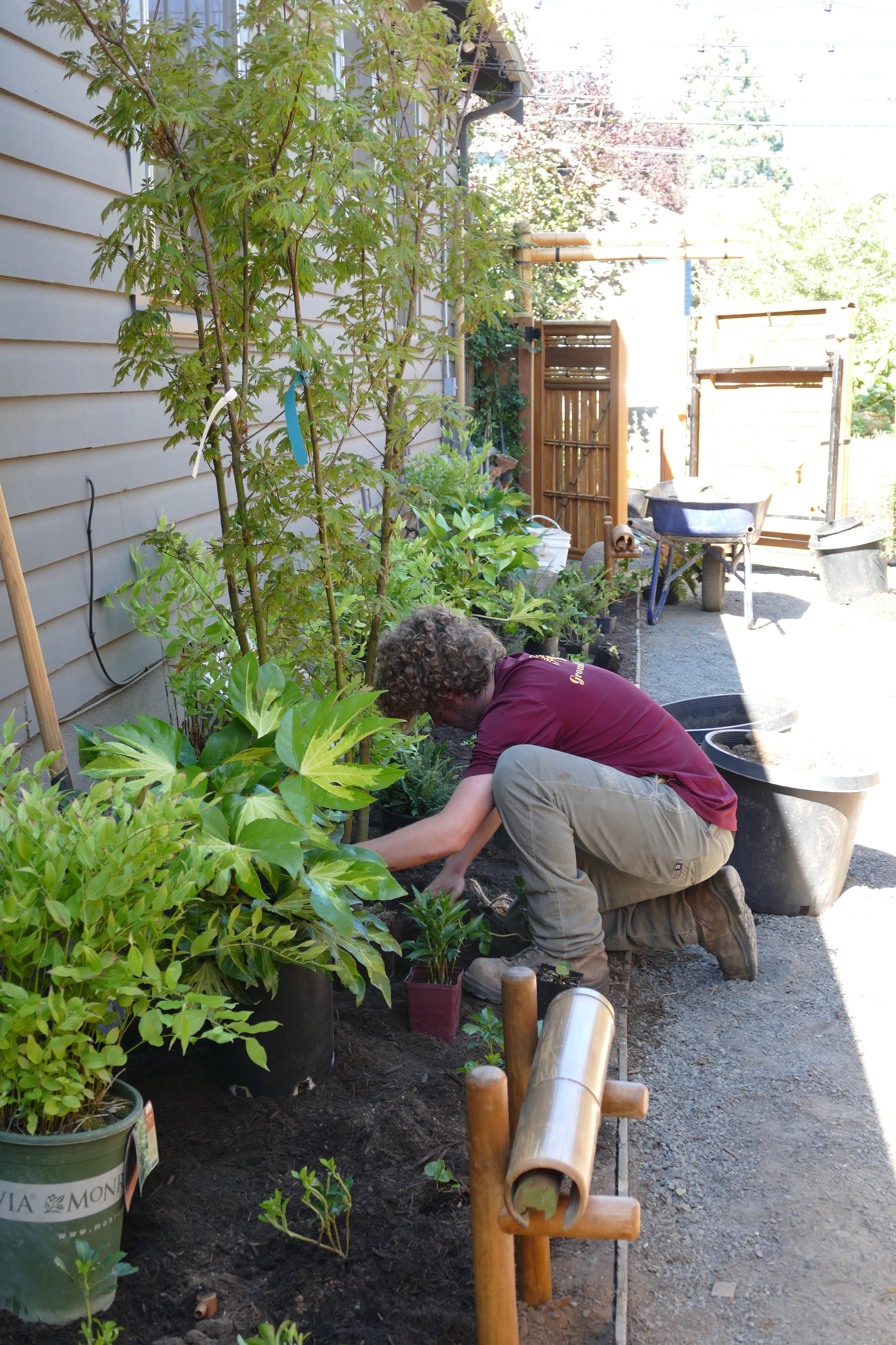 With the front walkway being heavily shaded on the South and in full sun on the North, plantings had to be chosen to thrive in these intense microclimates while also visually working together.