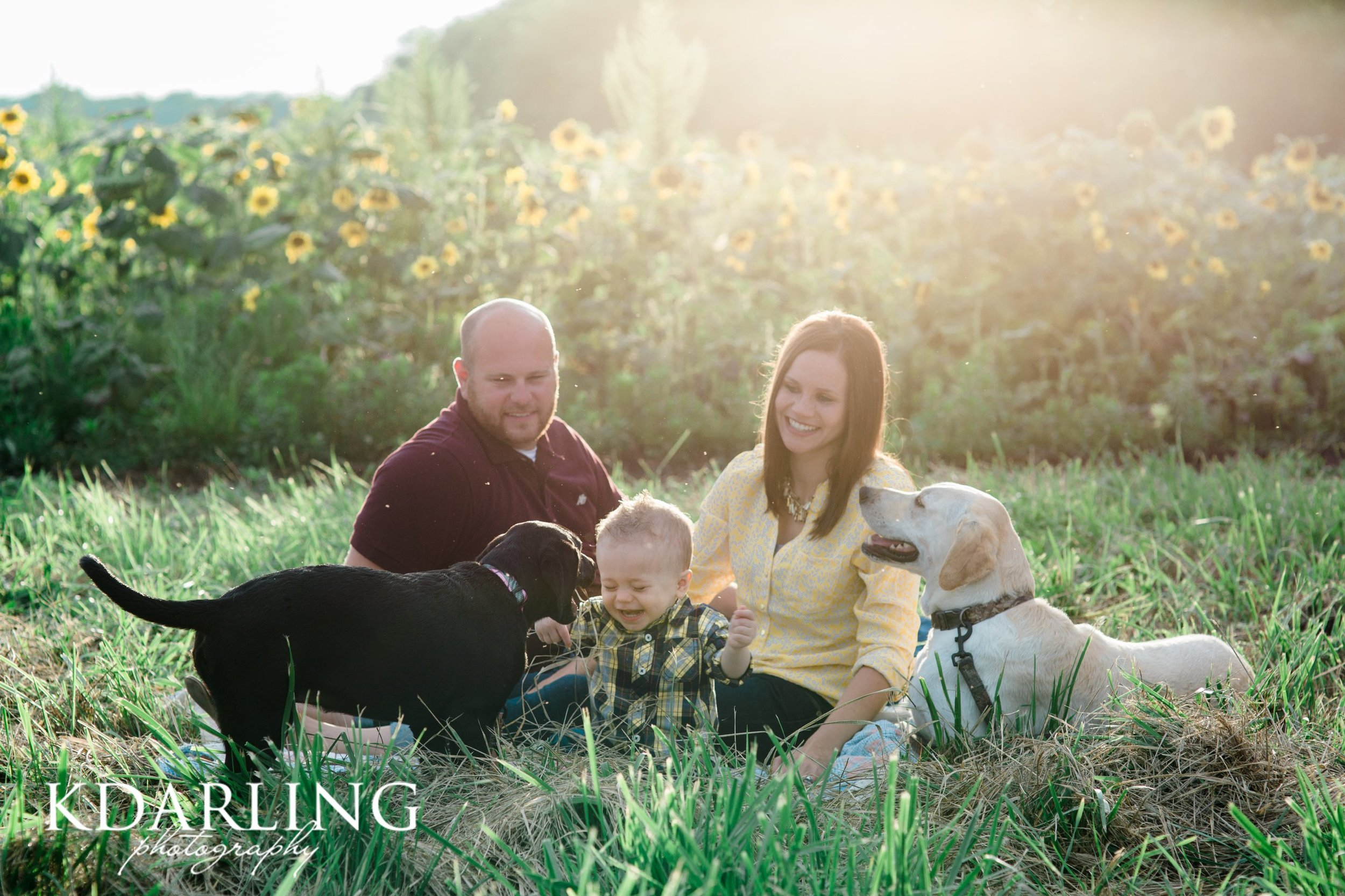 family of 3 with 2 dogs and sunflowers
