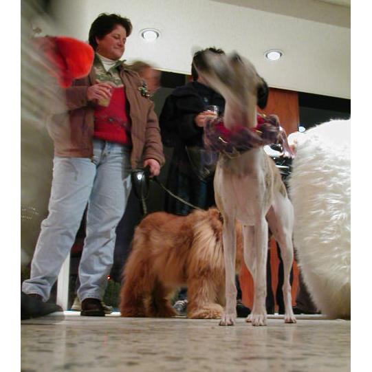 dogsofmedina_1.JPG